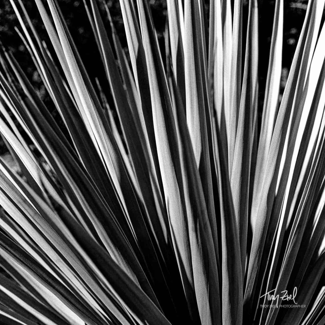 Cactus Blades
