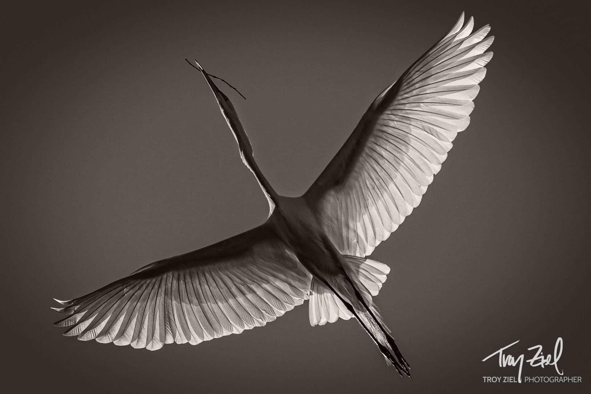 WingedEgrit